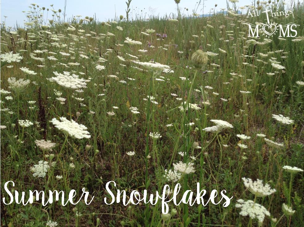 Summer Snowflakes